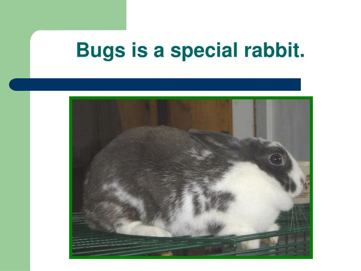 Bugs is a special rabbit