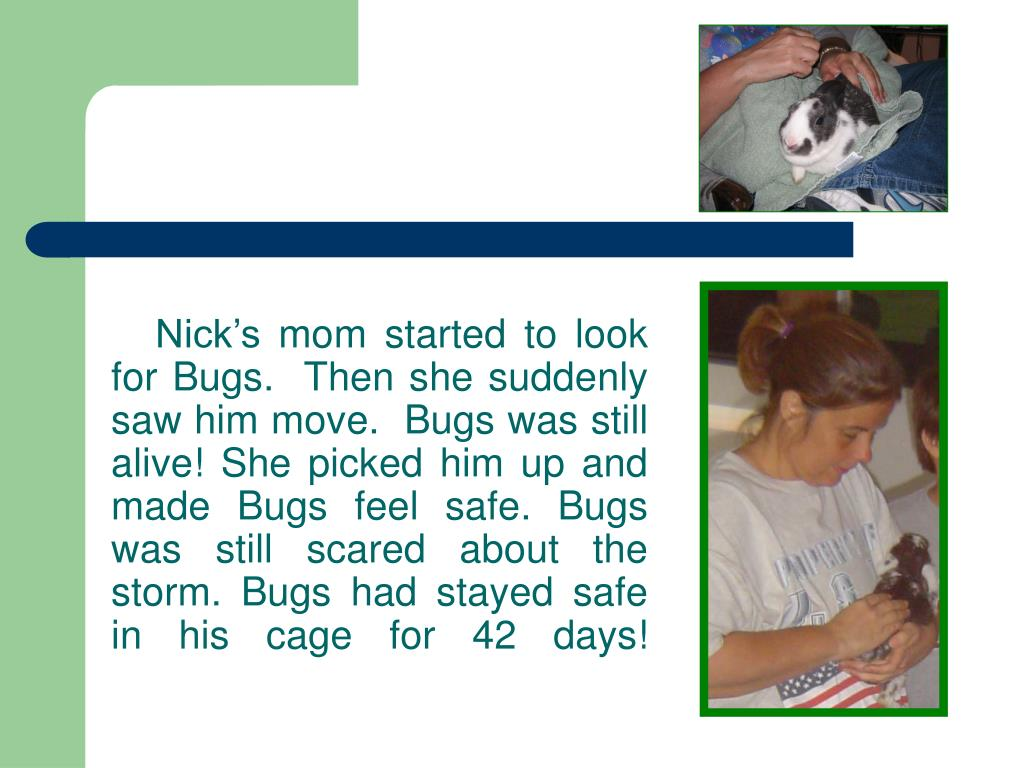 Nick's mom started to look for Bugs.  Then she suddenly saw him move.  Bugs was still alive! She picked him up and made Bugs feel safe. Bugs was still scared about the storm. Bugs had stayed safe in his cage for 42 days!