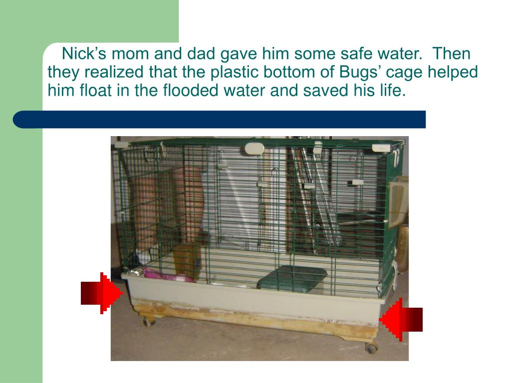 Nick's mom and dad gave him some safe water.  Then they realized that the plastic bottom of Bugs' cage helped him float in the flooded water and saved his life.