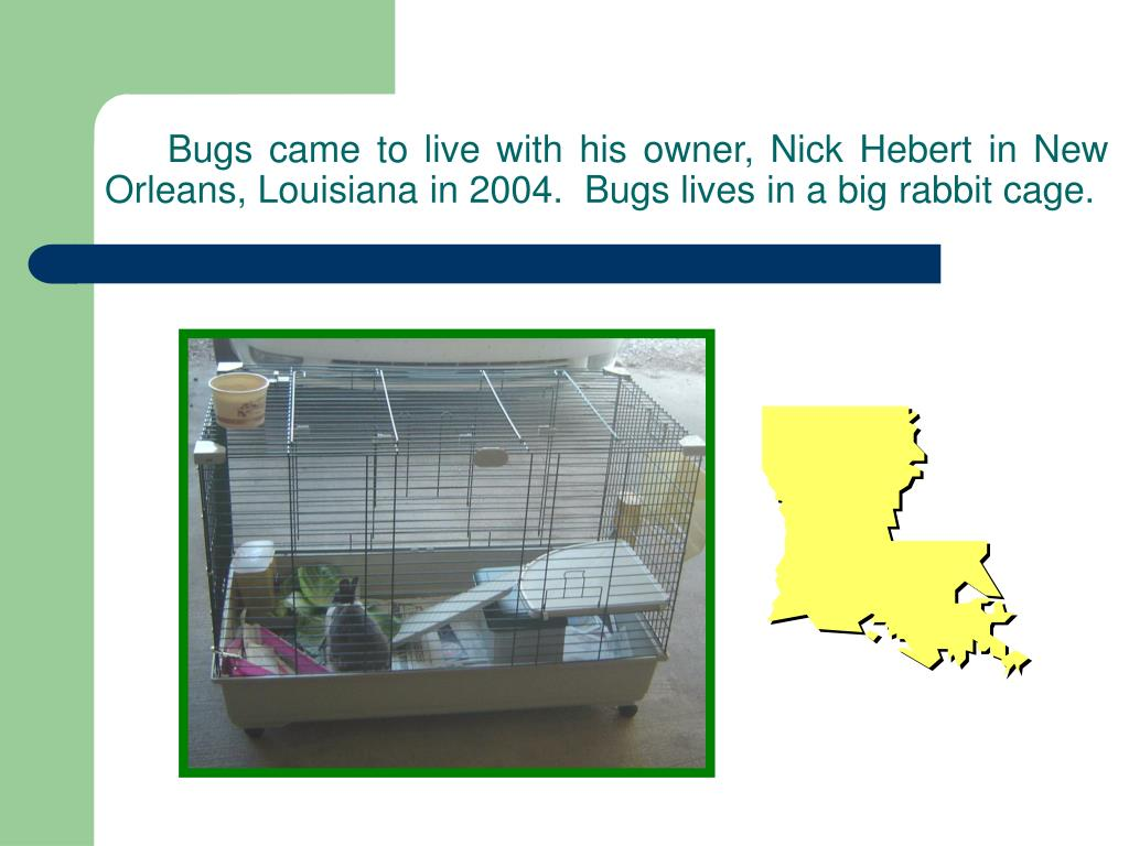 Bugs came to live with his owner, Nick Hebert in New Orleans, Louisiana in 2004.  Bugs lives in a big rabbit cage.