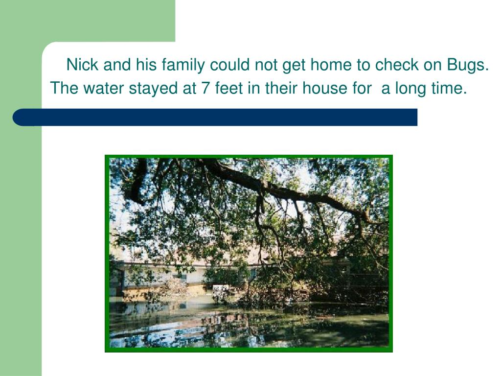 Nick and his family could not get home to check on Bugs.  The water stayed at 7 feet in their house for  a long time.
