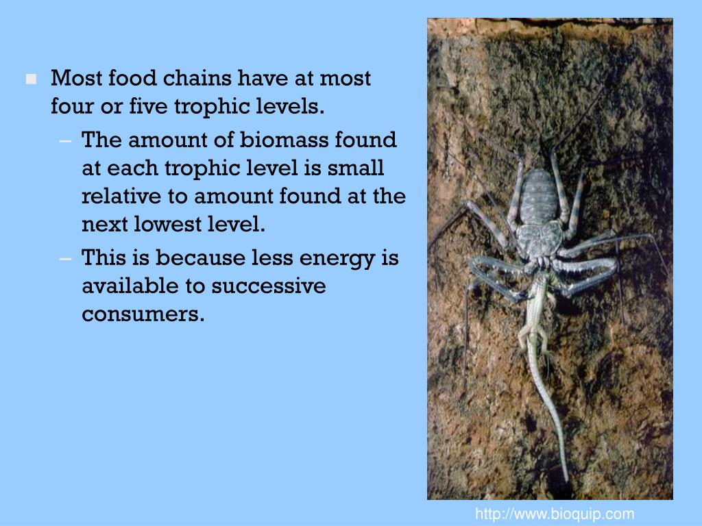 Most food chains have at most four or five trophic levels.