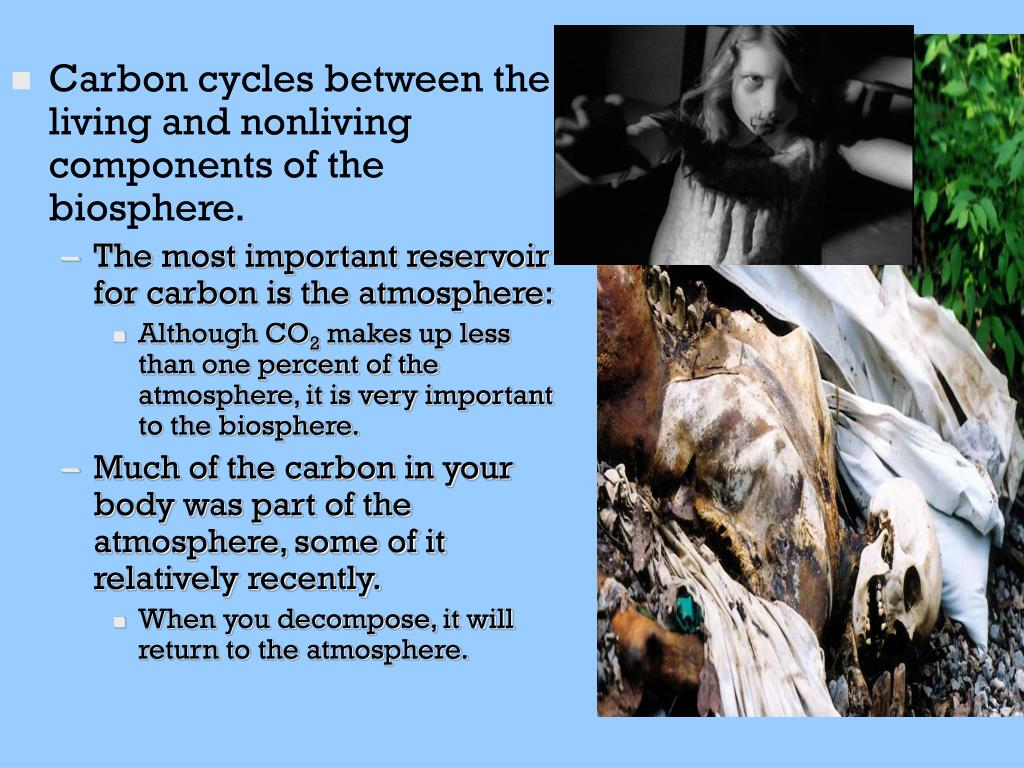 Carbon cycles between the living and nonliving components of the biosphere.