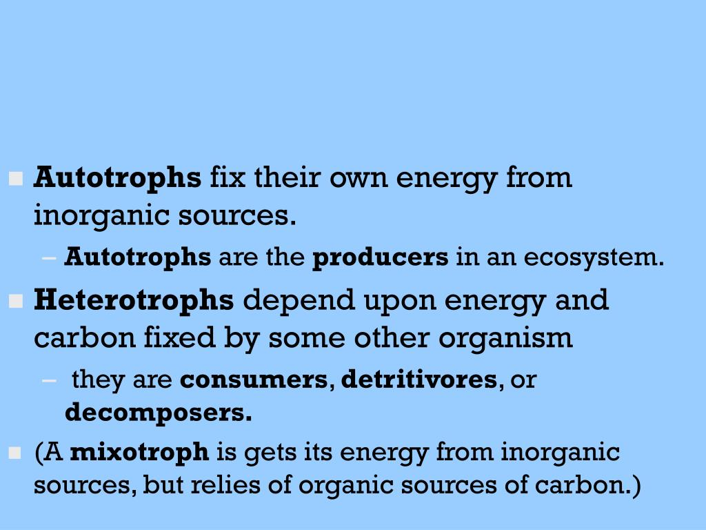 Autotrophs
