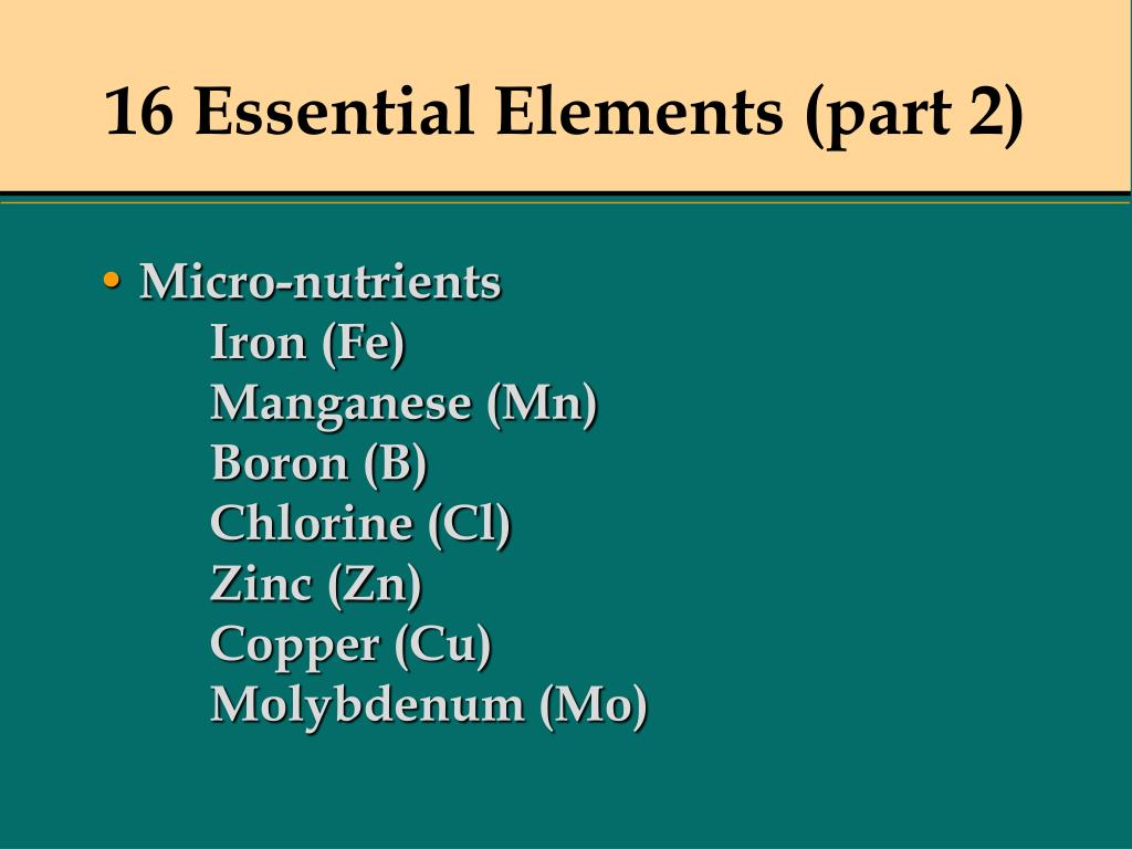 16 Essential Elements (part 2)