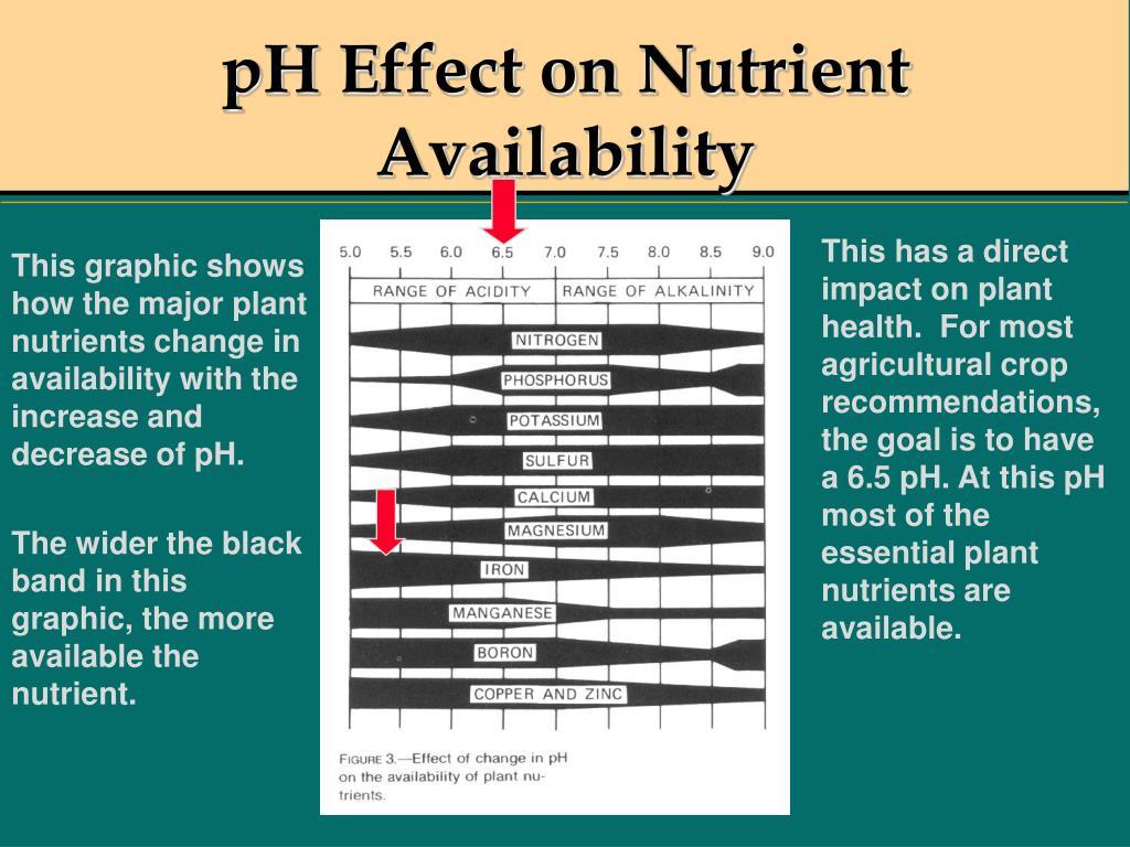 pH Effect on Nutrient Availability