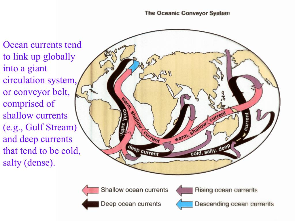 Ocean currents tend to link up globally into a giant circulation system, or conveyor belt, comprised of shallow currents (e.g., Gulf Stream) and deep currents that tend to be cold, salty (dense).