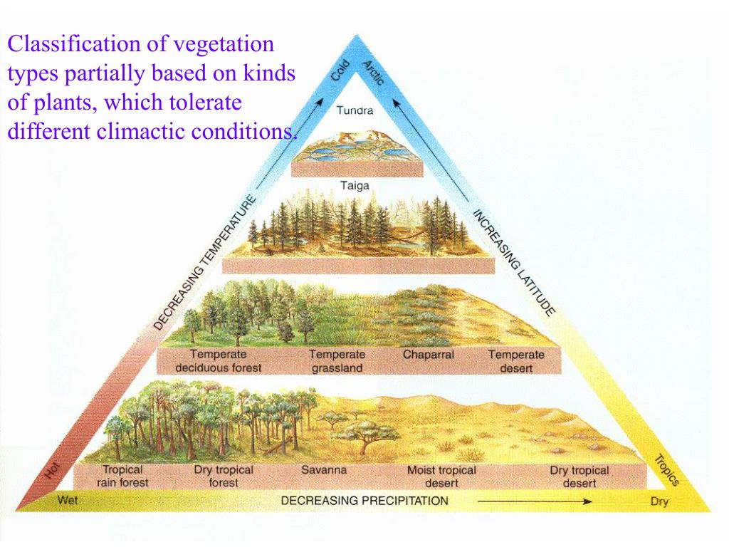 Classification of vegetation types partially based on kinds of plants, which tolerate different climactic conditions.