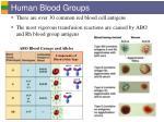 human blood groups29