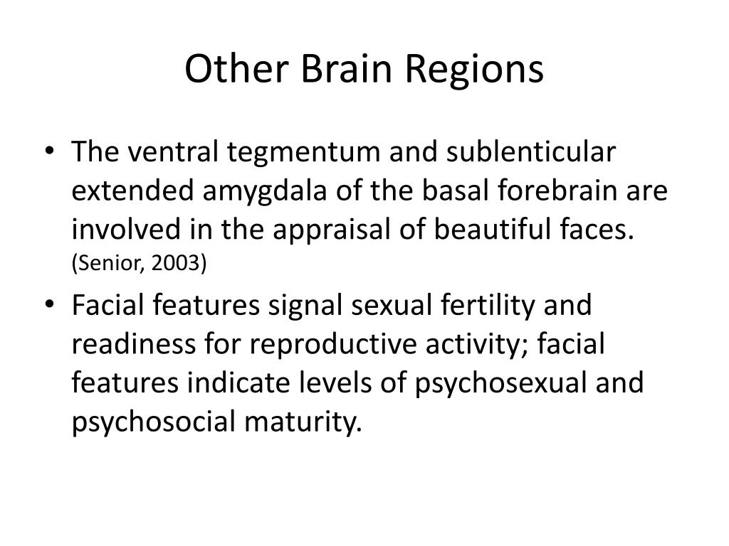 Other Brain Regions