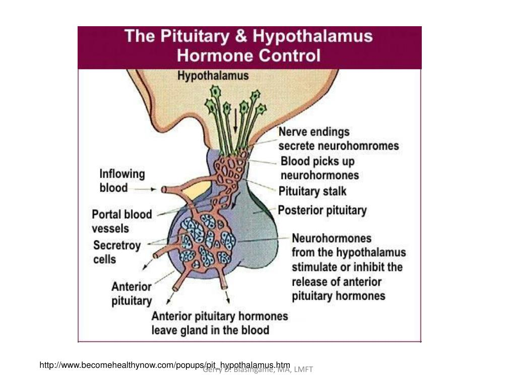 http://www.becomehealthynow.com/popups/pit_hypothalamus.htm