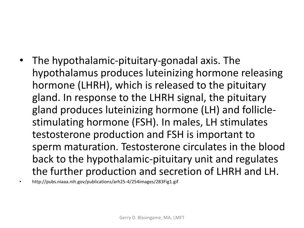 The hypothalamic-pituitary-gonadal axis. The hypothalamus produces luteinizing hormone releasing hormone (LHRH), which is released to the pituitary gland. In response to the LHRH signal, the pituitary gland produces luteinizing hormone (LH) and follicle-stimulating hormone (FSH). In males, LH stimulates testosterone production and FSH is important to sperm maturation. Testosterone circulates in the blood back to the hypothalamic-pituitary unit and regulates the further production and secretion of LHRH and LH.