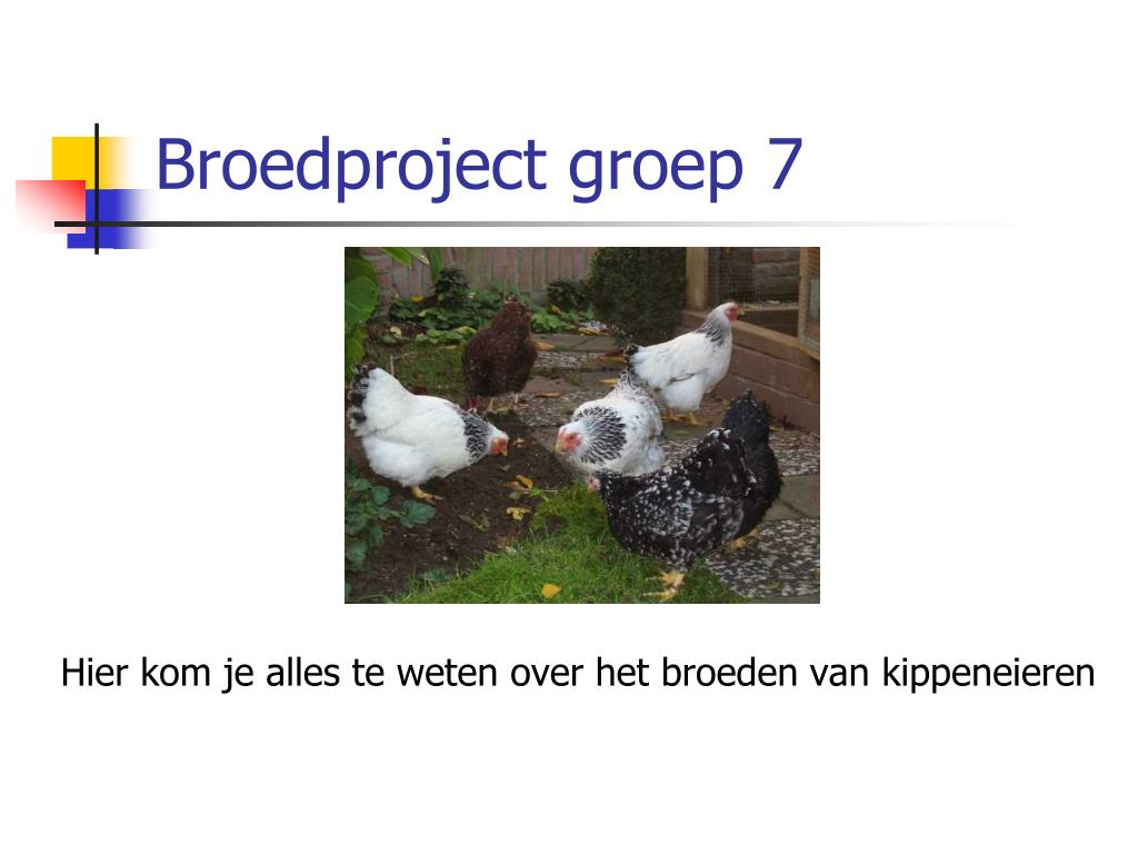 Broedproject groep 7