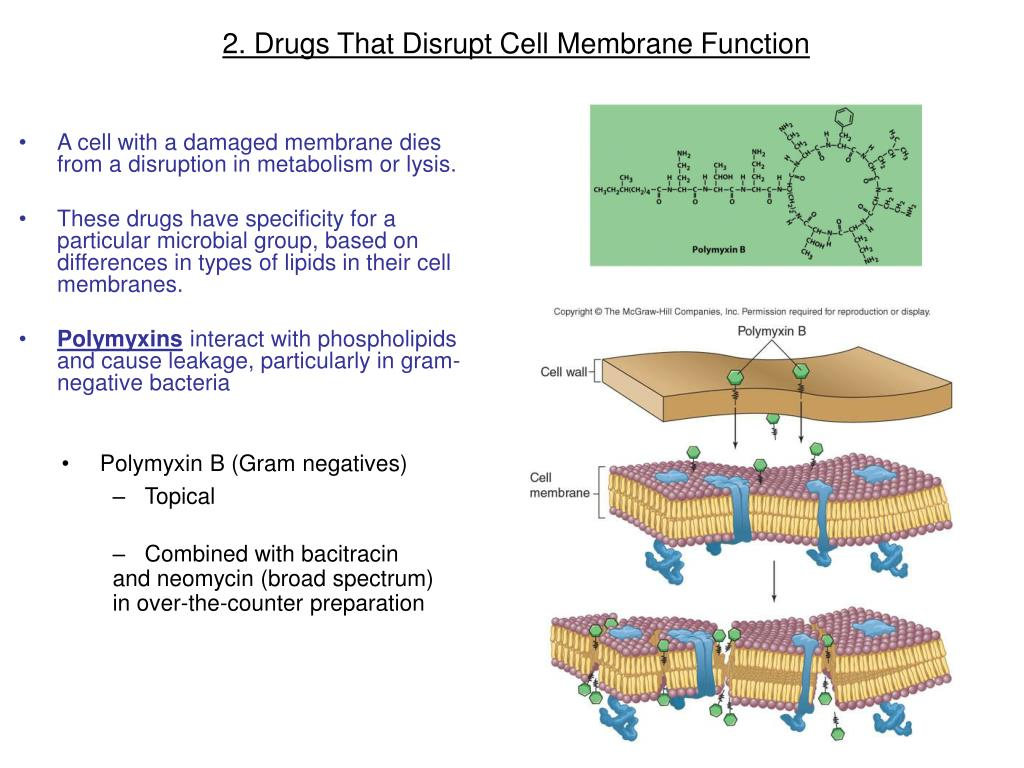 2. Drugs That Disrupt Cell Membrane Function