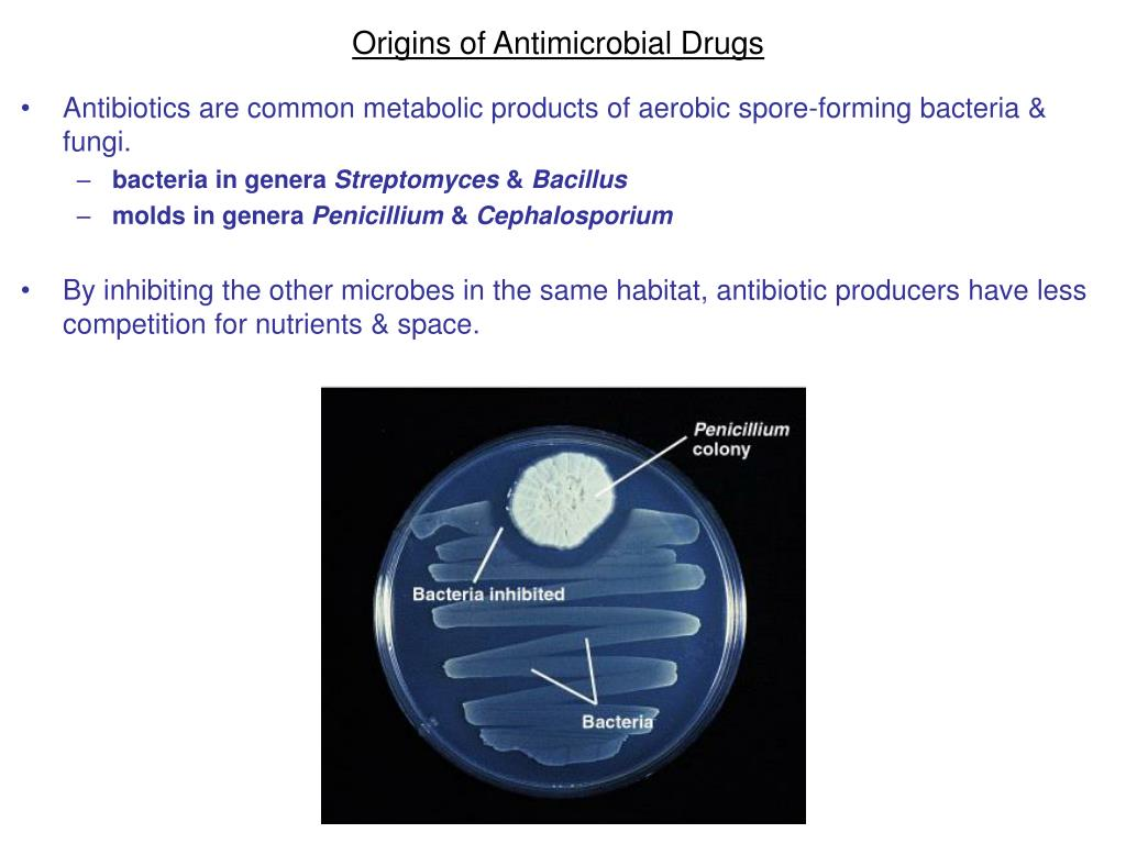 Origins of Antimicrobial Drugs