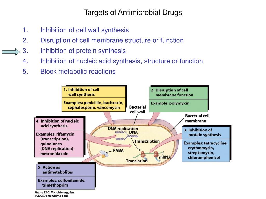 Targets of Antimicrobial Drugs