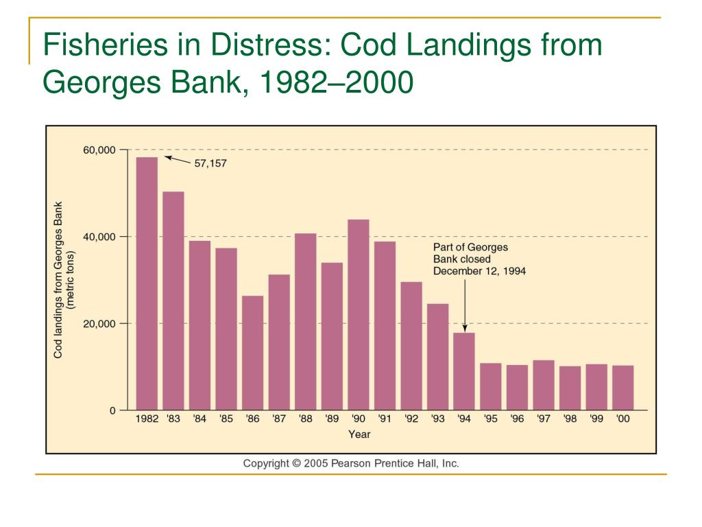 Fisheries in Distress: Cod Landings from Georges Bank, 1982–2000