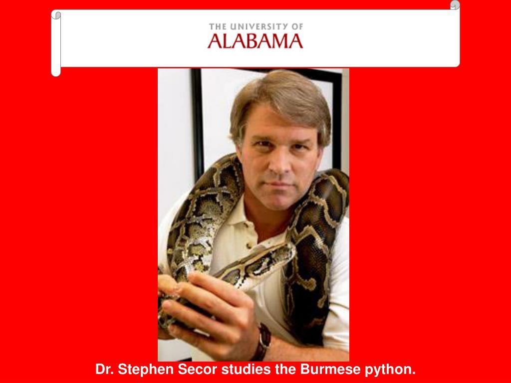 Dr. Stephen Secor studies the Burmese python.