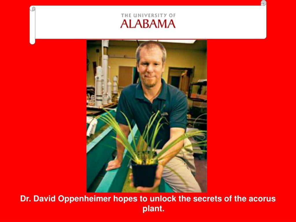 Dr. David Oppenheimer hopes to unlock the secrets of the acorus plant.