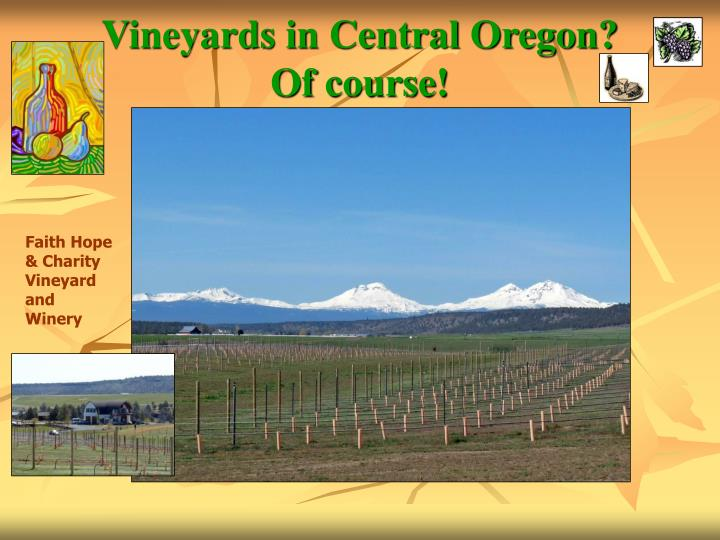 Vineyards in central oregon of course