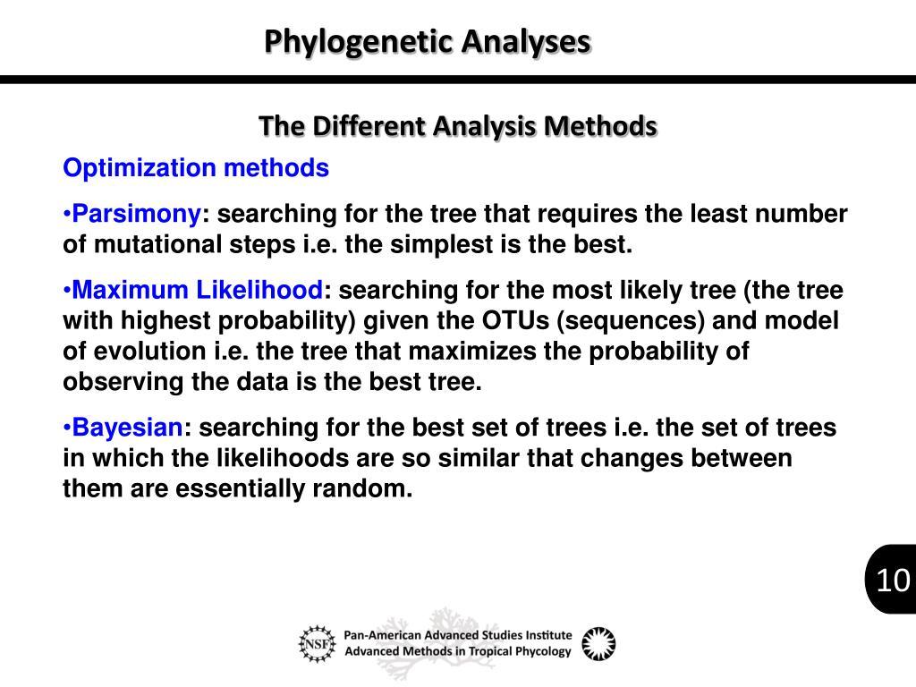 Phylogenetic Analyses