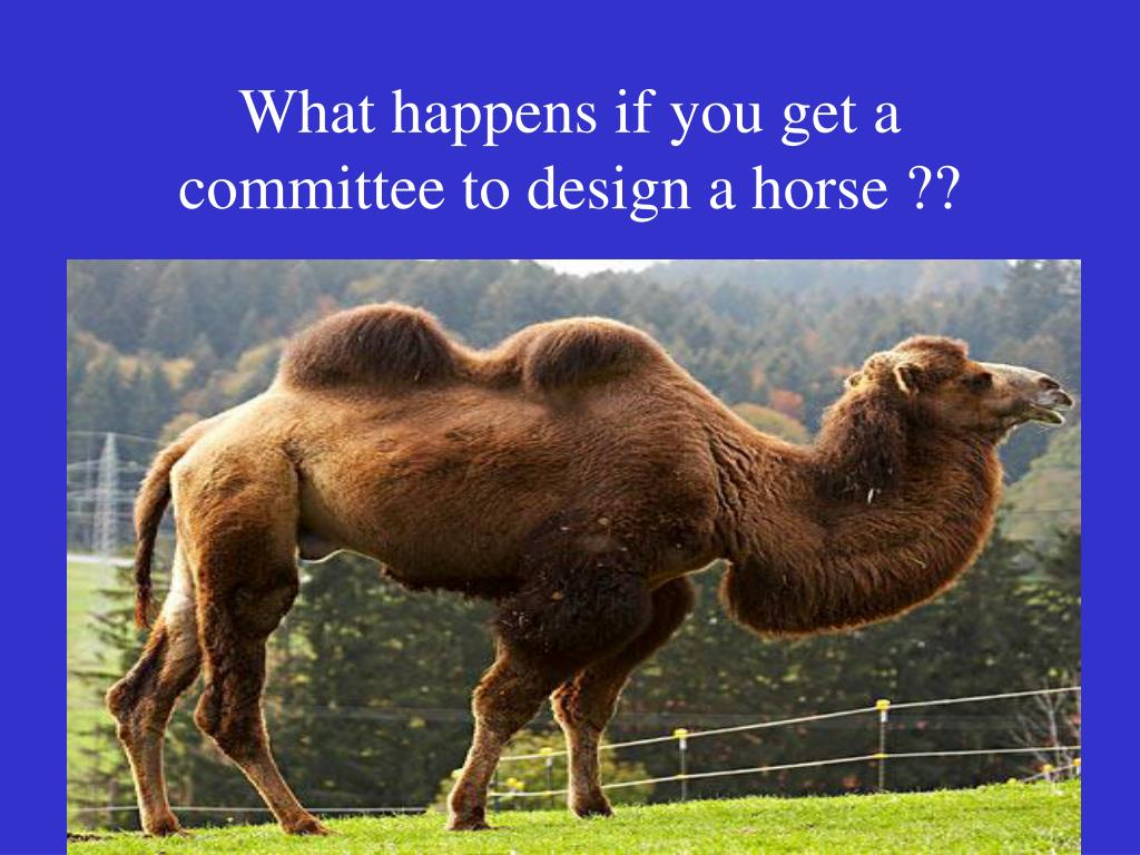 What happens if you get a committee to design a horse ??