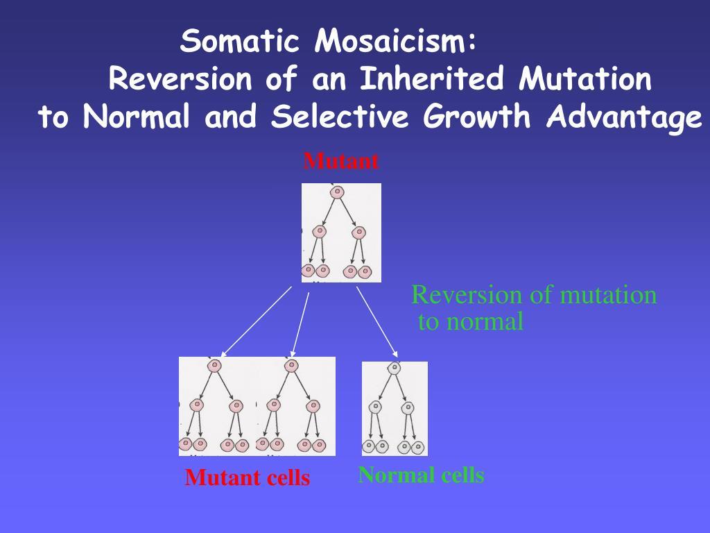 Reversion of mutation