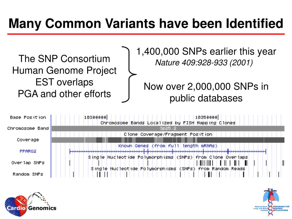 Many Common Variants have been Identified