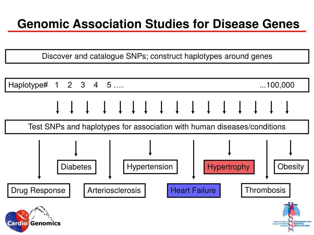 Genomic Association Studies for Disease Genes