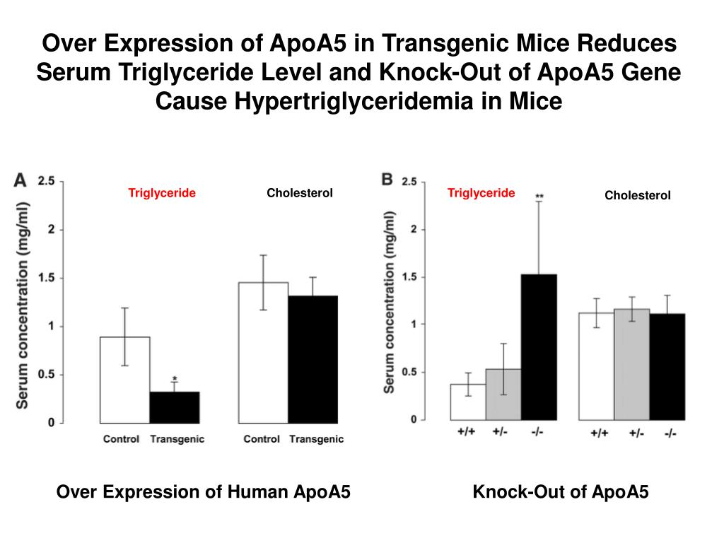 Over Expression of ApoA5 in Transgenic Mice Reduces Serum Triglyceride Level and Knock-Out of ApoA5 Gene Cause Hypertriglyceridemia in Mice