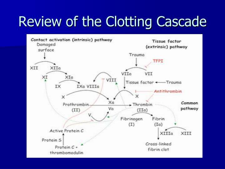 Review of the clotting cascade