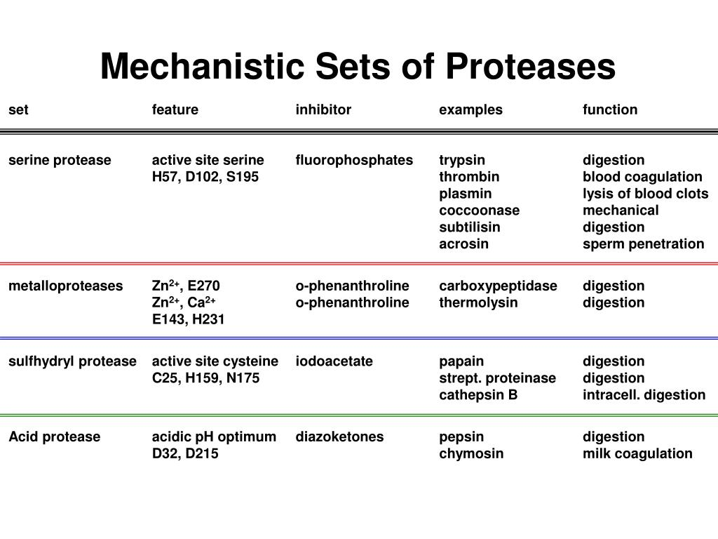 Mechanistic Sets of Proteases