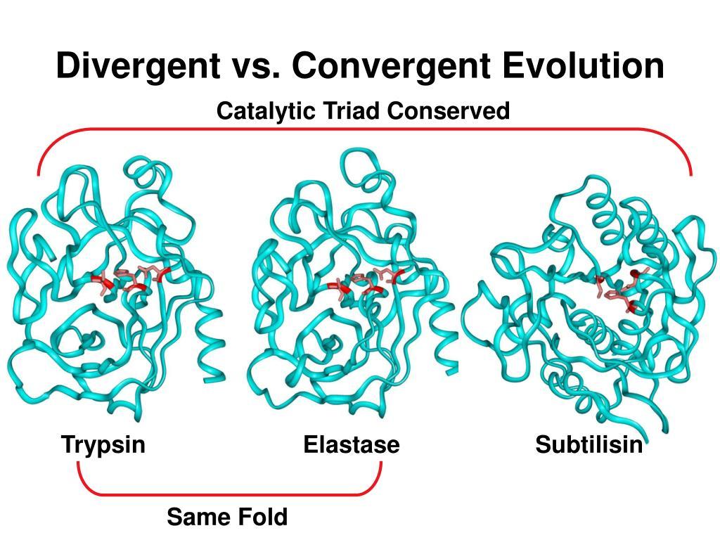 Divergent vs. Convergent Evolution