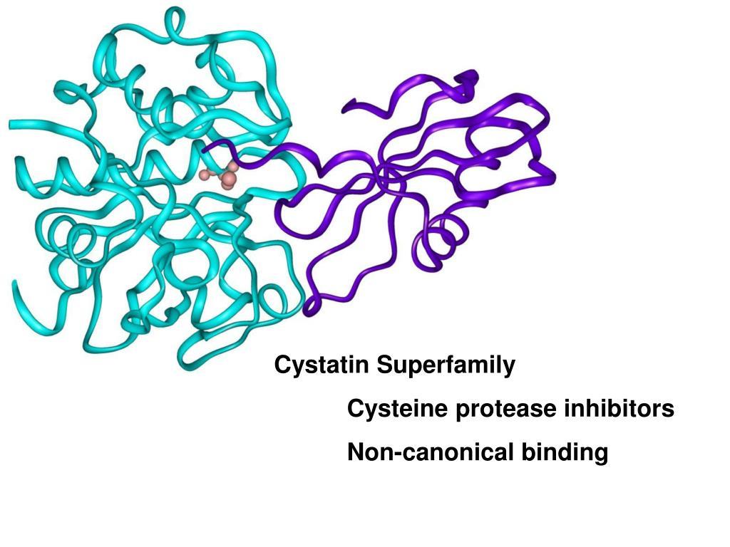 Cystatin Superfamily