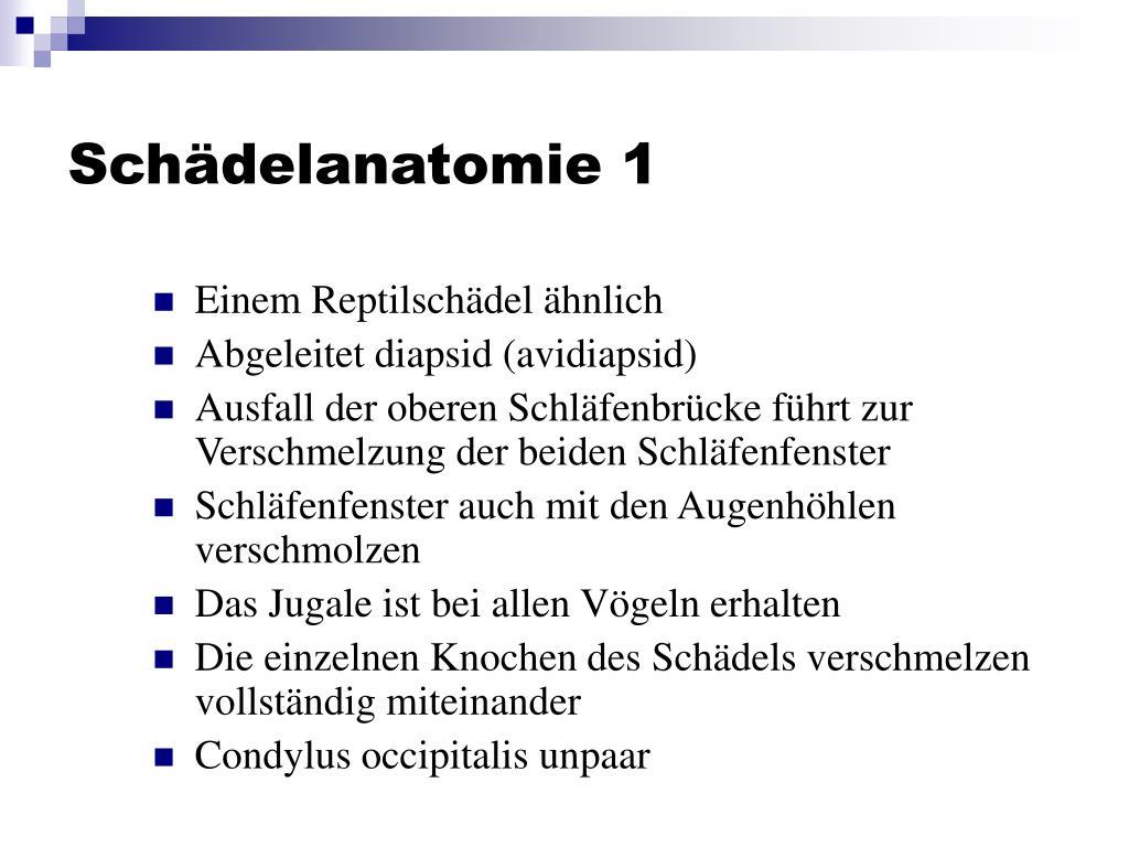 Schädelanatomie 1