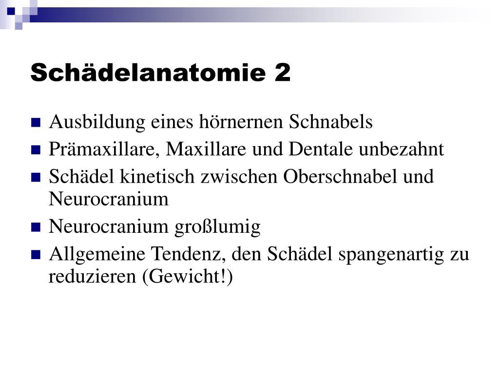 Schädelanatomie 2
