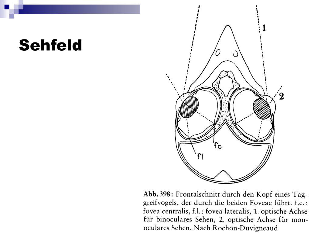 Sehfeld