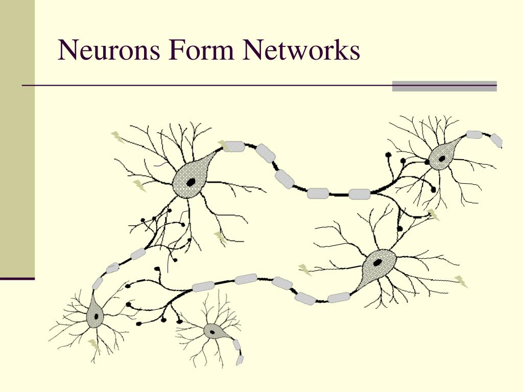 Neurons Form Networks