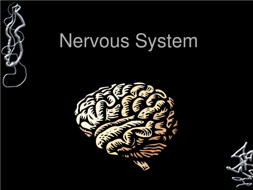nervous system l.