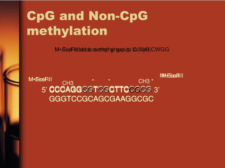 CpG and Non-CpG methylation
