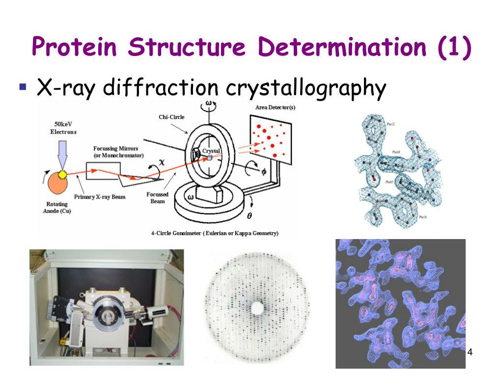Protein Structure Determination (1)