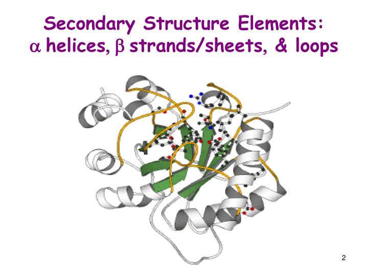 Secondary structure elements a helices b strands sheets loops