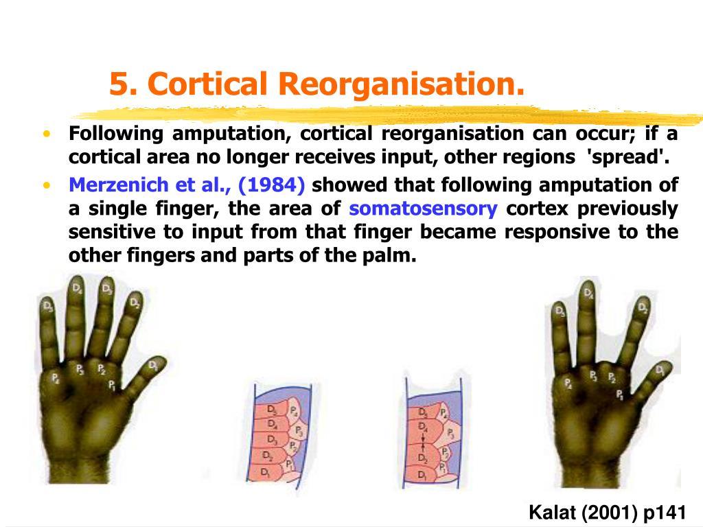 5. Cortical Reorganisation.