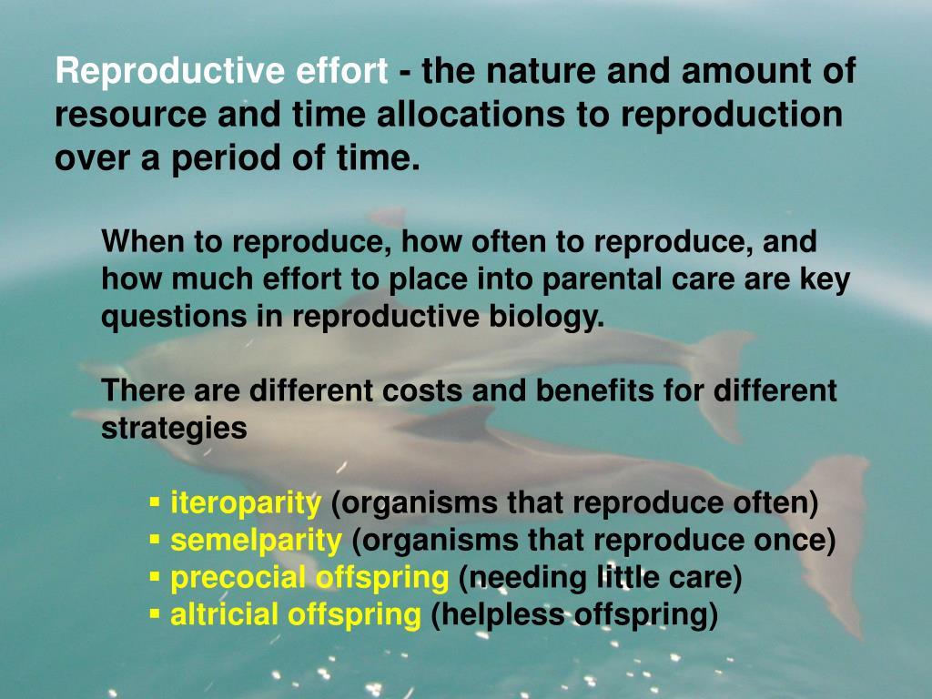 Reproductive effort