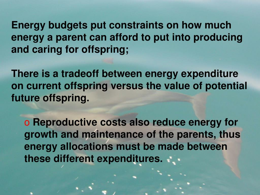Energy budgets put constraints on how much energy a parent can afford to put into producing and caring for offspring;