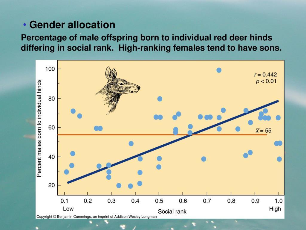 Gender allocation