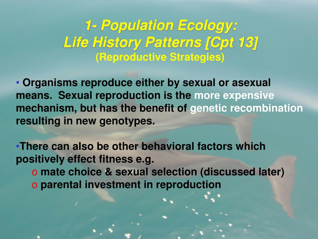 1- Population Ecology:                                            Life History Patterns [Cpt 13]