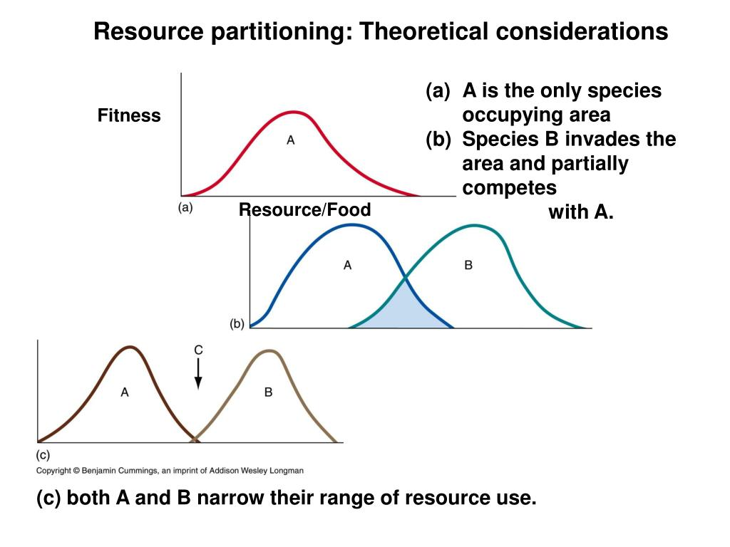 Resource partitioning: Theoretical considerations