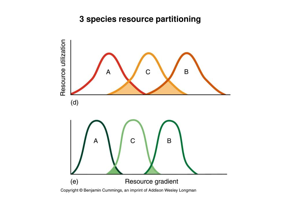 3 species resource partitioning