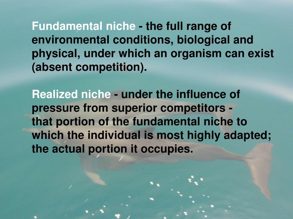 Fundamental niche